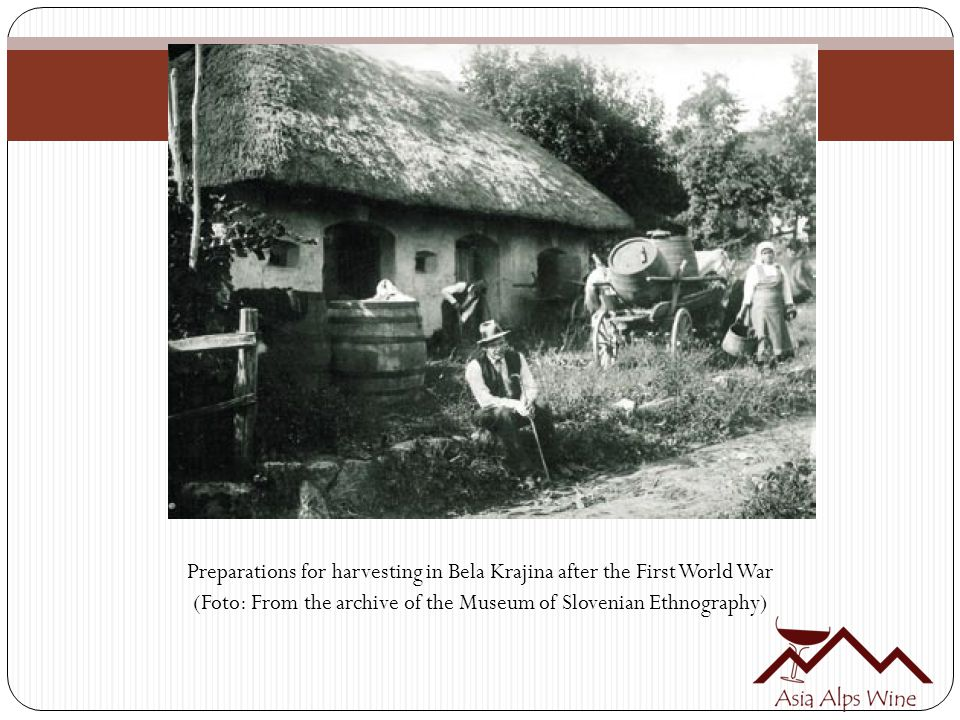 Preparations for harvesting in Bela Krajina after the First World War (Foto: From the archive of the Museum of Slovenian Ethnography)