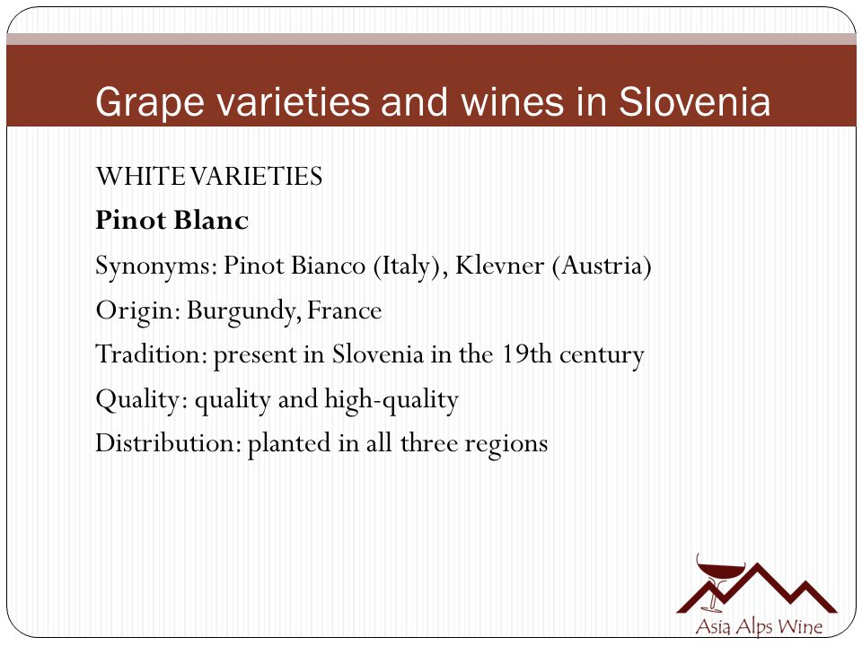 Grape varieties and wines in Slovenia WHITE VARIETIES Pinot Blanc Synonyms: Pinot Bianco (Italy), Klevner (Austria) Origin: Burgundy, France Tradition: present in Slovenia in the 19th century Quality: quality and high-quality Distribution: planted in all three regions