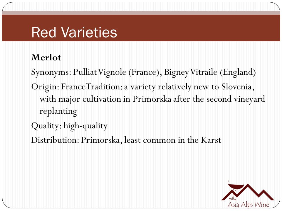 Red Varieties Merlot Synonyms: Pulliat Vignole (France), Bigney Vitraile (England) Origin: FranceTradition: a variety relatively new to Slovenia, with major cultivation in Primorska after the second vineyard replanting Quality: high-quality Distribution: Primorska, least common in the Karst