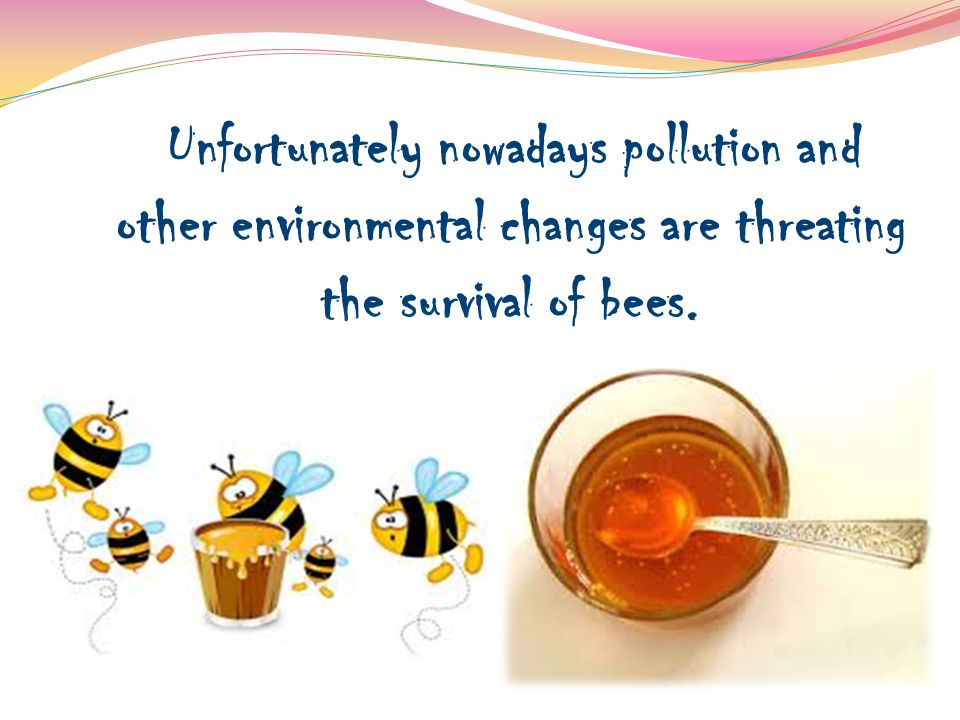 Unfortunately nowadays pollution and other environmental changes are threating the survival of bees.