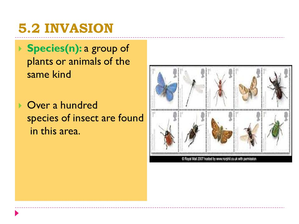 5.2 INVASION  Species(n): a group of plants or animals of the same kind  Over a hundred species of insect are found in this area.