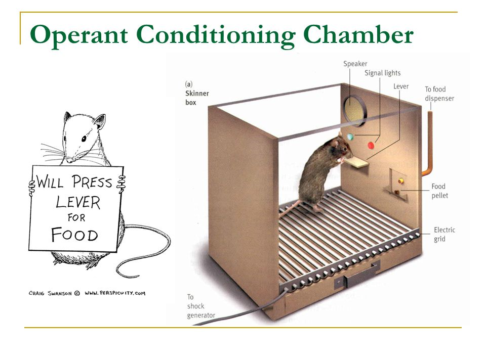 Operant Conditioning in action: Self-control Physical Restraint Physically manipulate the environment to prevent the occurrence of some problem behavior.