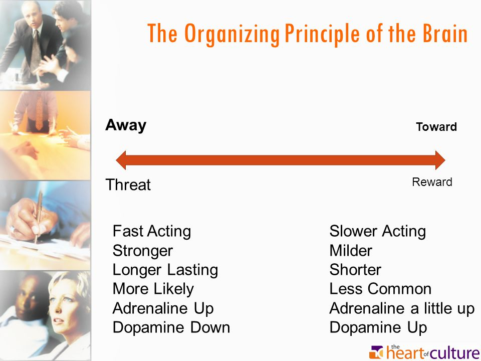 The Organizing Principle of the Brain Away Toward Threat Reward Fast Acting Stronger Longer Lasting More Likely Adrenaline Up Dopamine Down Slower Act
