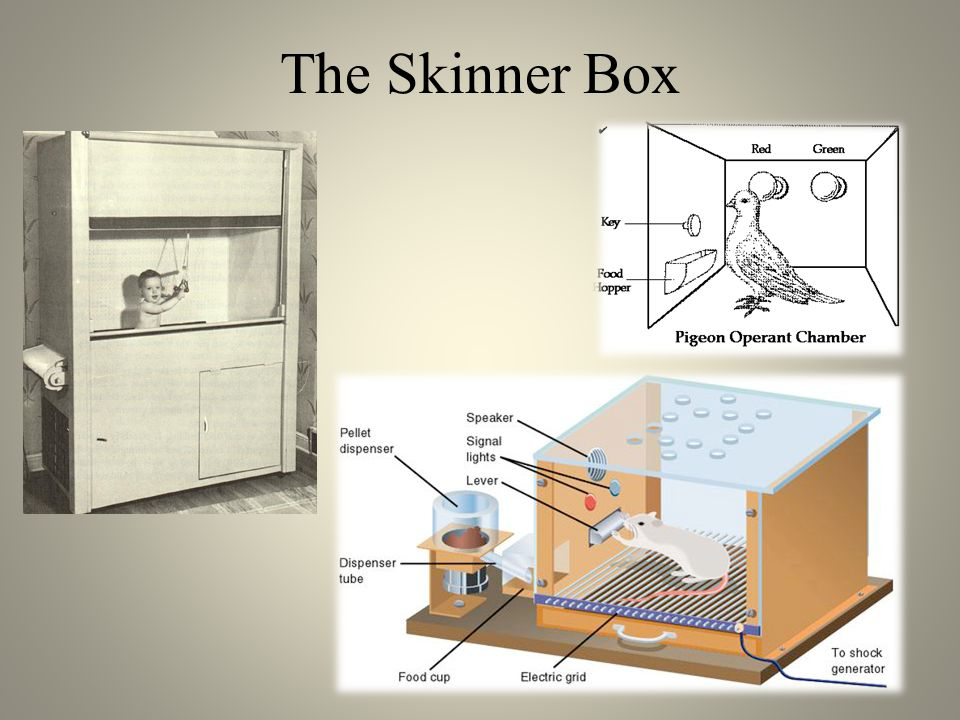 The Skinner Box
