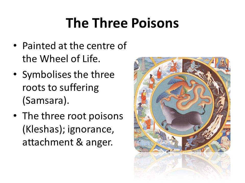 The Three Poisons Painted at the centre of the Wheel of Life.