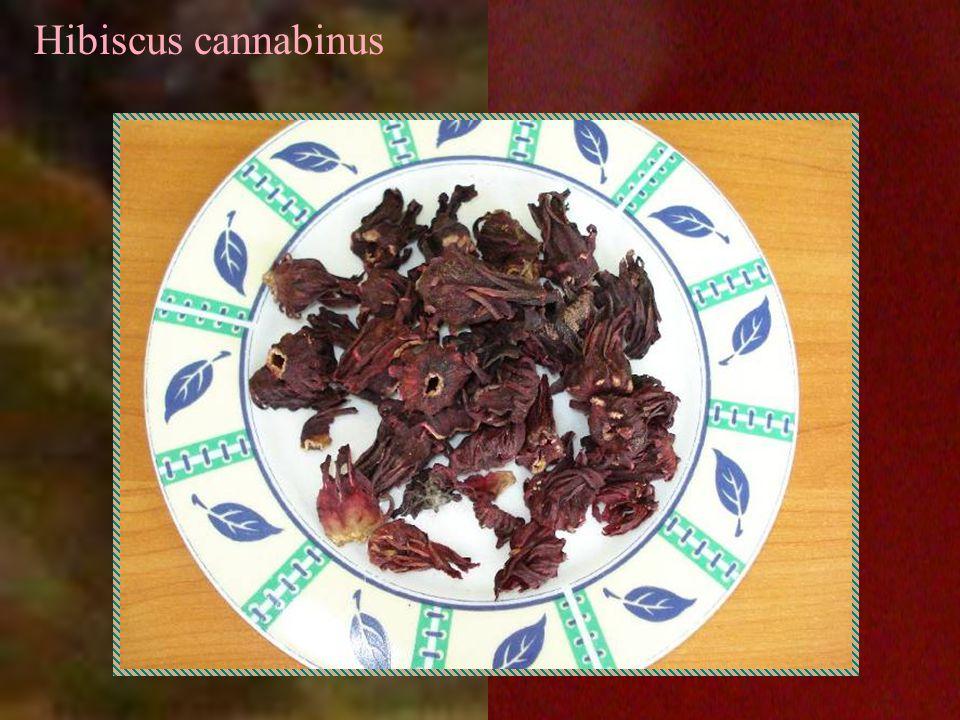 Hibiscus cannabinus