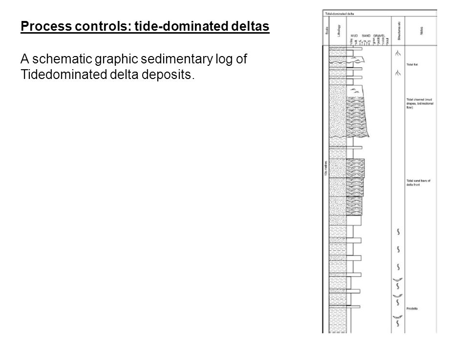 A schematic graphic sedimentary log of Tidedominated delta deposits. Process controls: tide-dominated deltas
