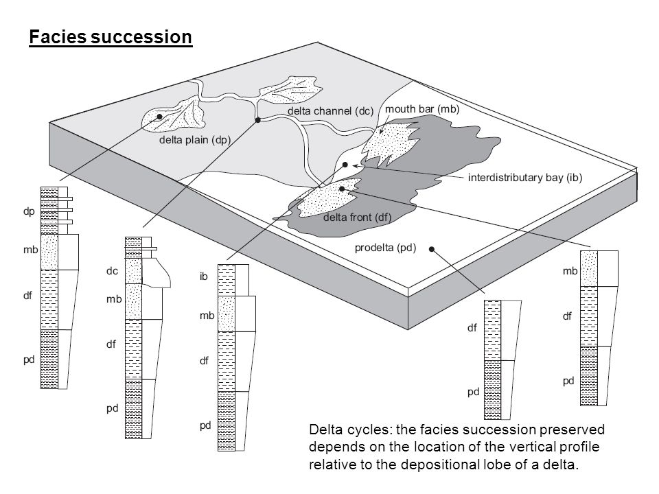 Delta cycles: the facies succession preserved depends on the location of the vertical profile relative to the depositional lobe of a delta. Facies suc