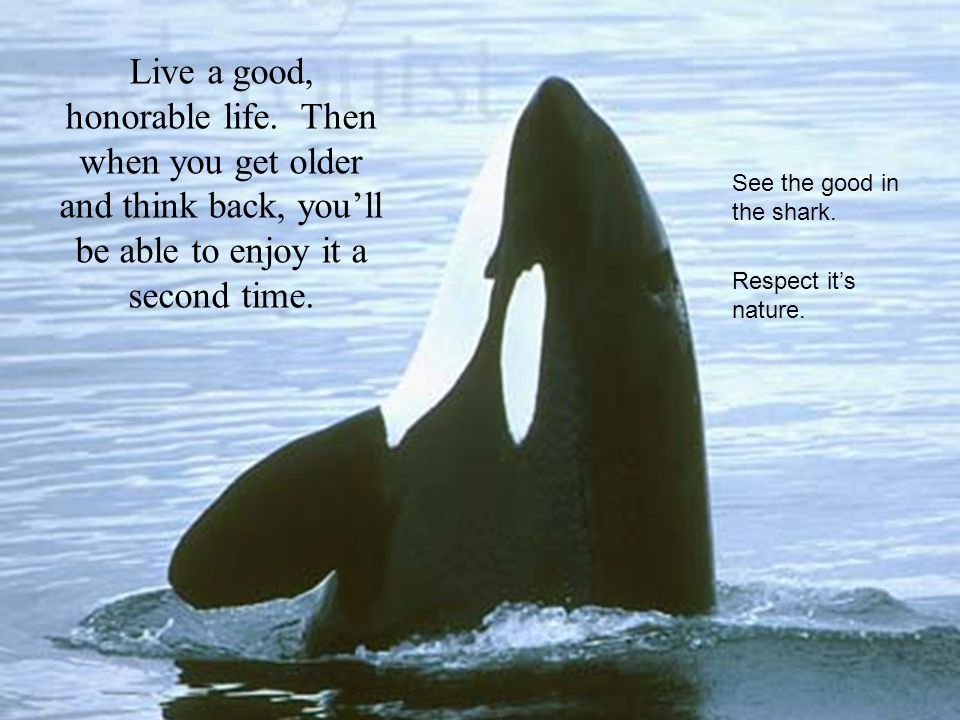 Live a good, honorable life. Then when you get older and think back, you'll be able to enjoy it a second time. See the good in the shark. Respect it's