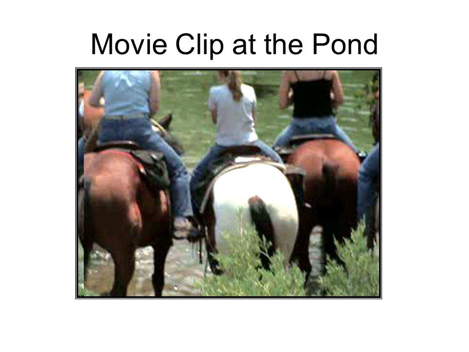 Movie Clip at the Pond
