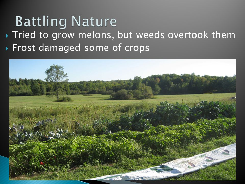 Tried to grow melons, but weeds overtook them  Frost damaged some of crops