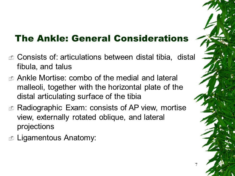 The Ankle: General Considerations  Consists of: articulations between distal tibia, distal fibula, and talus  Ankle Mortise: combo of the medial and