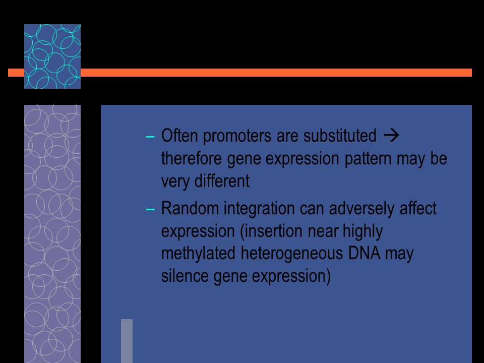 –Often promoters are substituted  therefore gene expression pattern may be very different –Random integration can adversely affect expression (insertion near highly methylated heterogeneous DNA may silence gene expression)