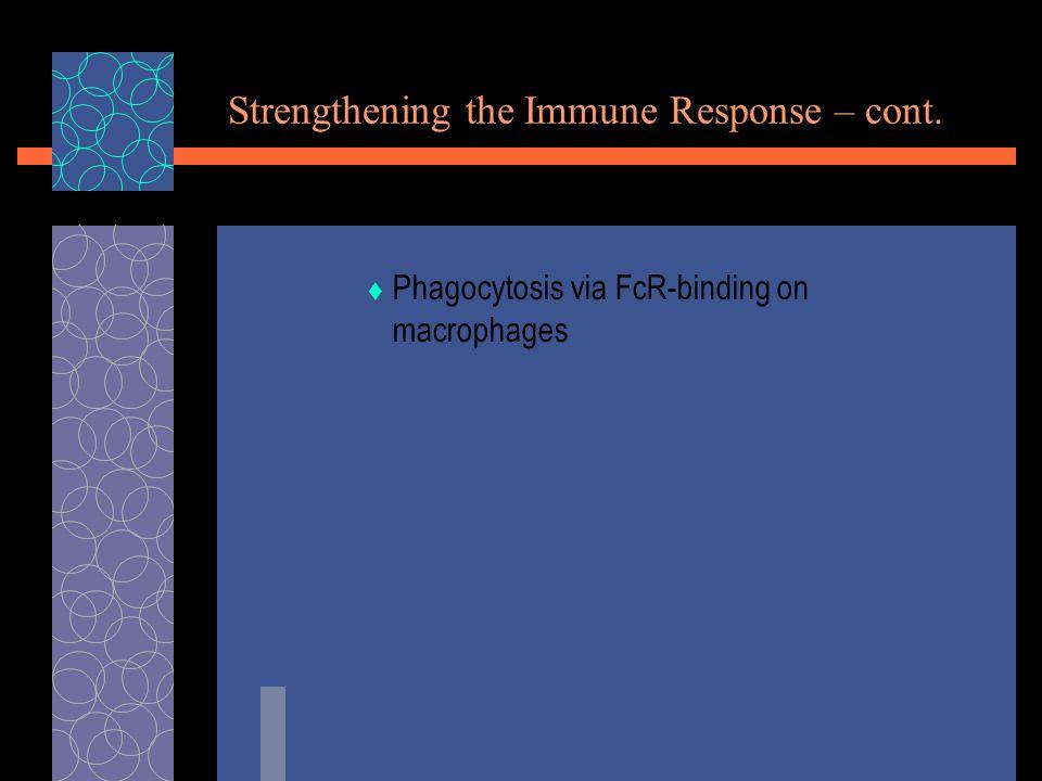 Strengthening the Immune Response – cont.  Phagocytosis via FcR-binding on macrophages