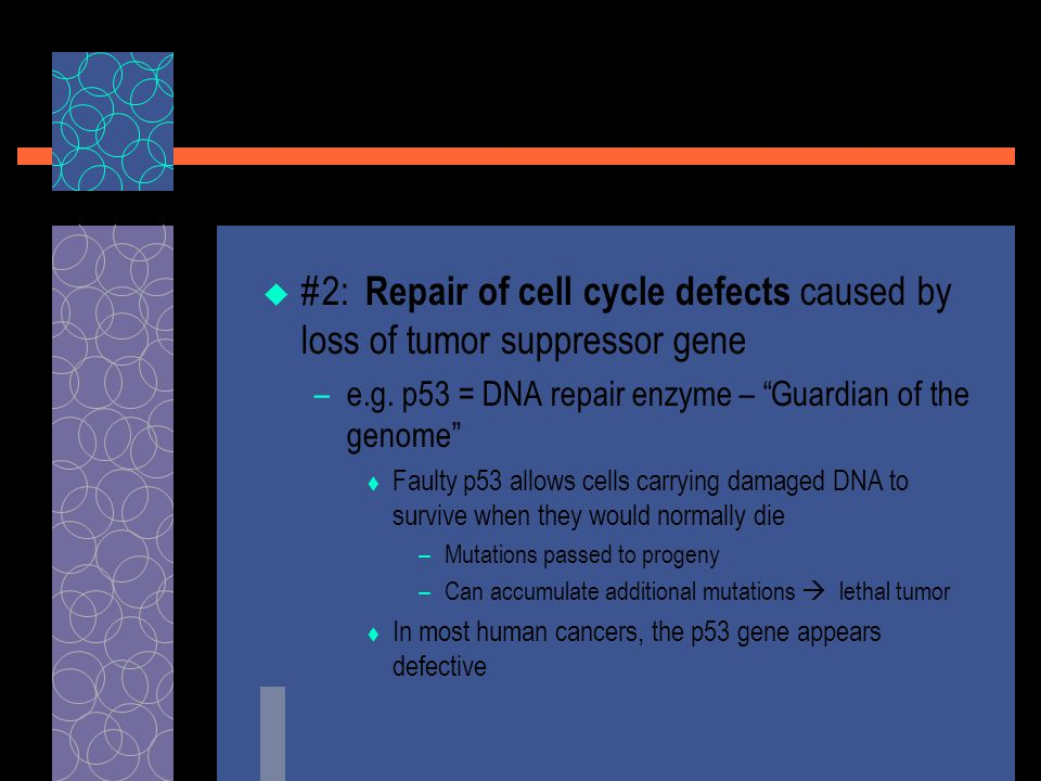  #2: Repair of cell cycle defects caused by loss of tumor suppressor gene –e.g.