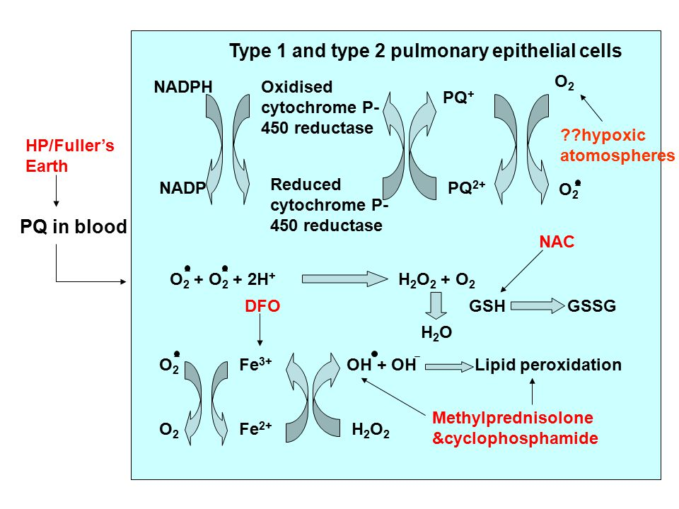PQ in blood Type 1 and type 2 pulmonary epithelial cells NADPH NADP Oxidised cytochrome P- 450 reductase Reduced cytochrome P- 450 reductase PQ + PQ 2+ O2O2 O2O2 O 2 + O 2 + 2H + H 2 O 2 + O 2 O2O2 O2O2 Fe 3+ Fe 2+ OH + OH H2O2H2O2 Lipid peroxidation H2OH2O GSH GSSG HP/Fuller's Earth DFO Methylprednisolone &cyclophosphamide NAC hypoxic atomospheres