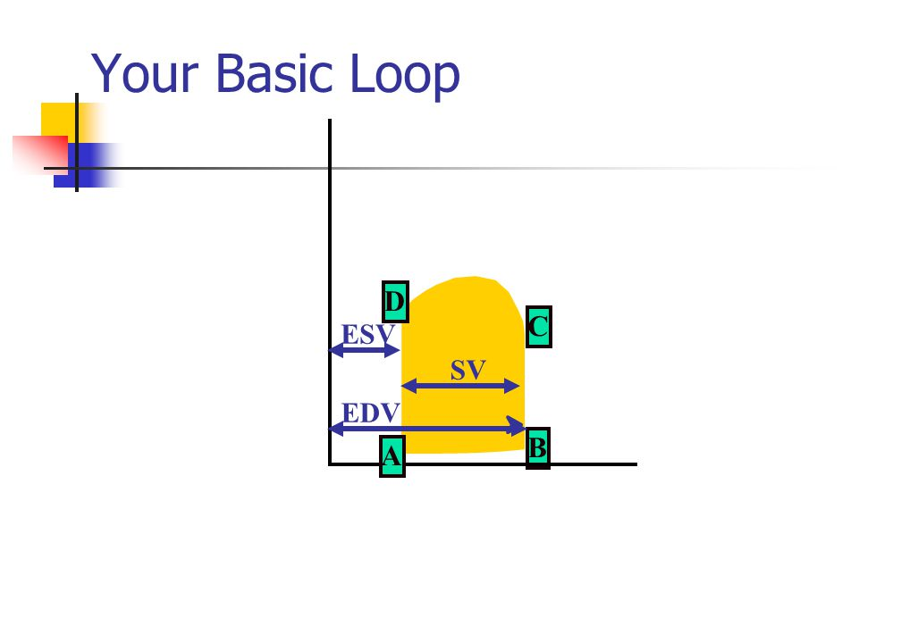 Your Basic Loop B C A D EDV ESV SV