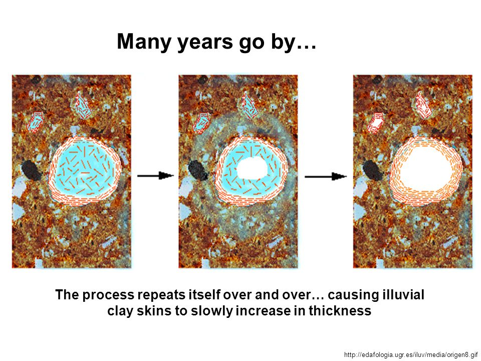 The process repeats itself over and over… causing illuvial clay skins to slowly increase in thickness Many years go by… http://edafologia.ugr.es/iluv/media/origen8.gif