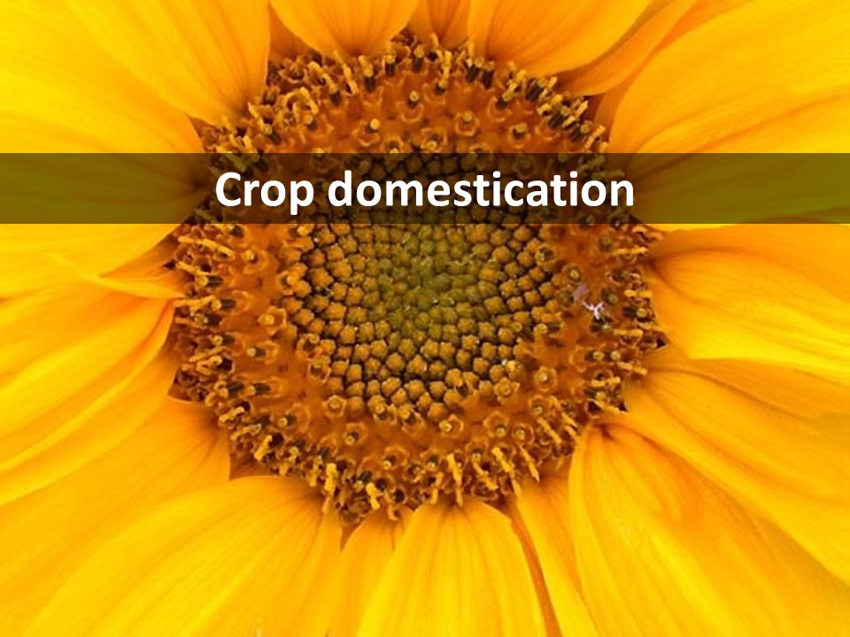 Domestication genes in plants