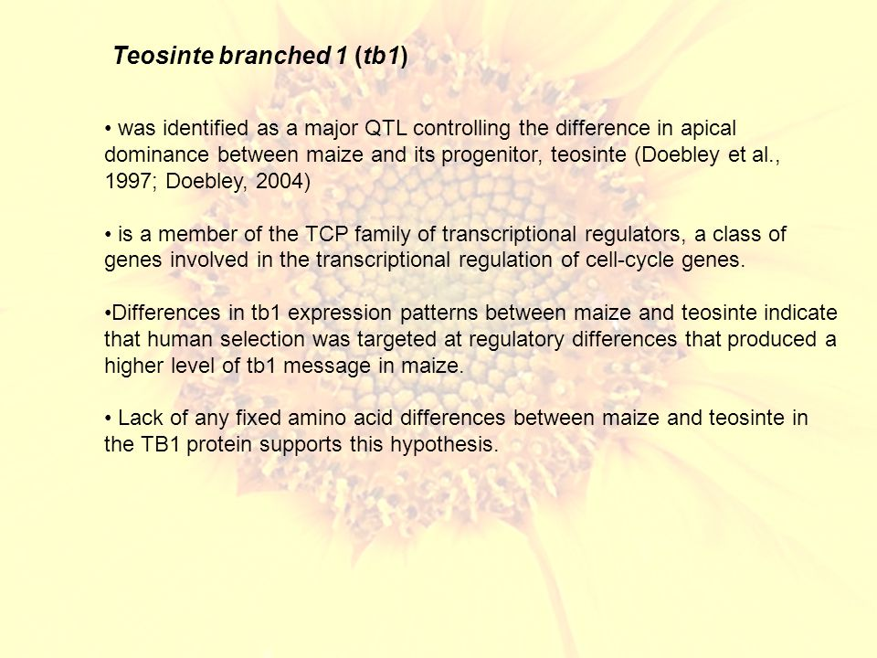 Teosinte branched 1 (tb1) was identified as a major QTL controlling the difference in apical dominance between maize and its progenitor, teosinte (Doebley et al., 1997; Doebley, 2004) is a member of the TCP family of transcriptional regulators, a class of genes involved in the transcriptional regulation of cell-cycle genes.