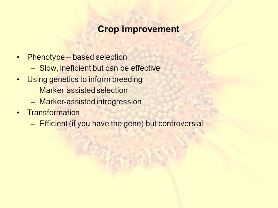 Crop improvement Phenotype – based selection –Slow, ineficient but can be effective Using genetics to inform breeding –Marker-assisted selection –Marker-assisted introgression Transformation –Efficient (if you have the gene) but controversial