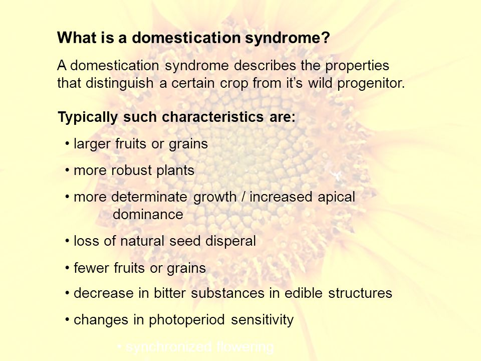 What is a domestication syndrome.
