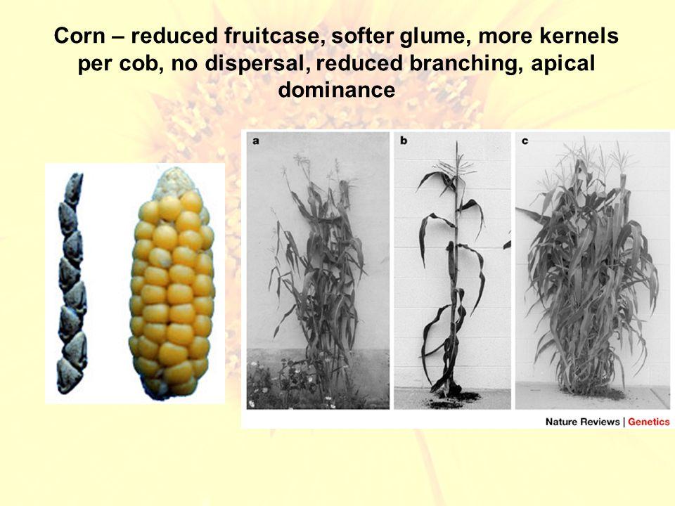 Lettuce – leaf size/shape, fewer secondary compounds