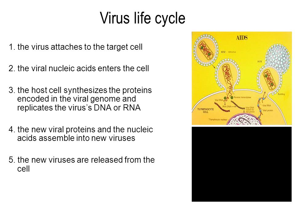 1. the virus attaches to the target cell 2. the viral nucleic acids enters the cell 3.