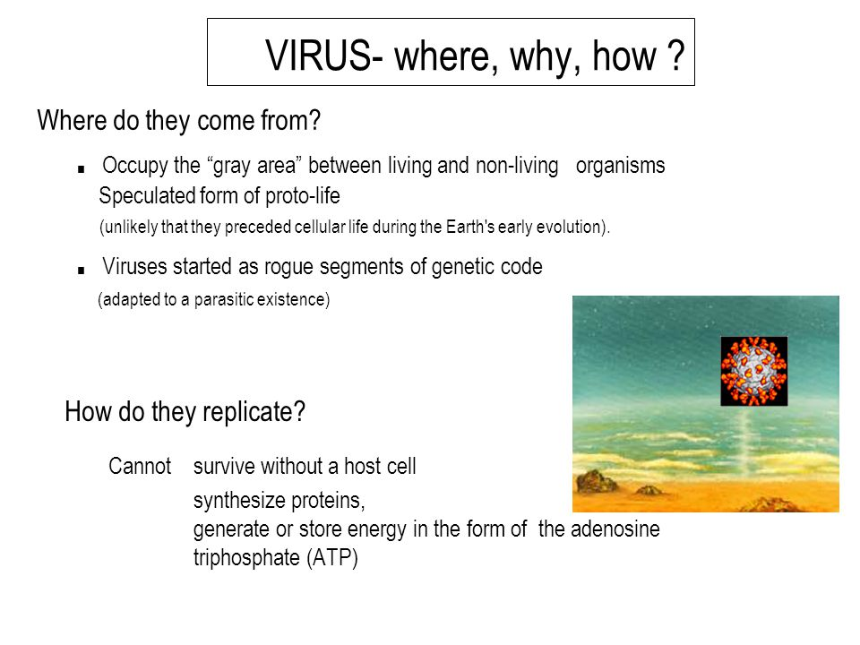 VIRUS- where, why, how ?.