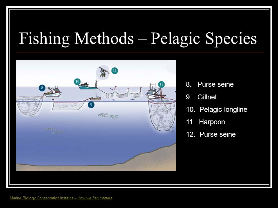 Fishing Methods – Pelagic Species 8. Purse seine 9. Gillnet 10. Pelagic longline 11. Harpoon 12. Purse seine Marine Biology Conservation Institute – H