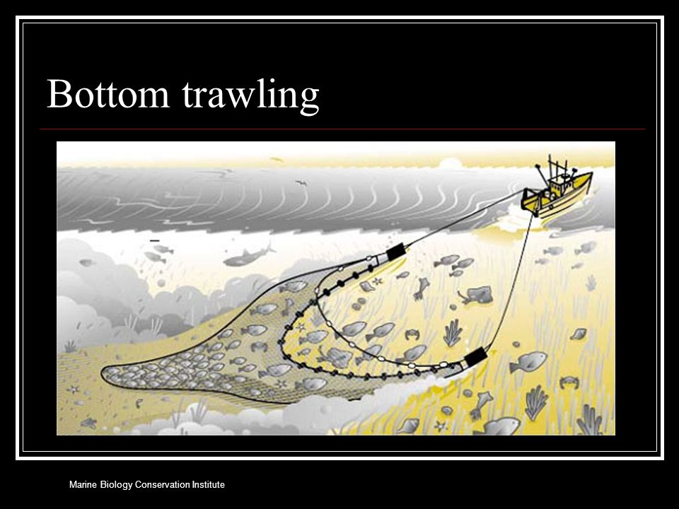 Bottom trawling Marine Biology Conservation Institute