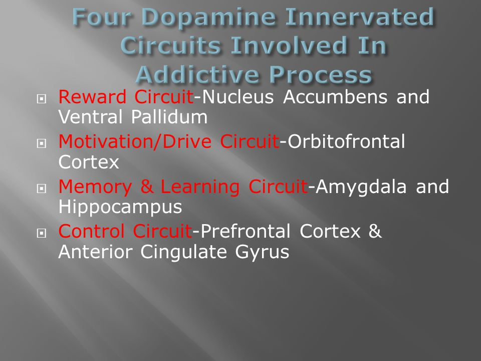  Reward Circuit-Nucleus Accumbens and Ventral Pallidum  Motivation/Drive Circuit-Orbitofrontal Cortex  Memory & Learning Circuit-Amygdala and Hippocampus  Control Circuit-Prefrontal Cortex & Anterior Cingulate Gyrus