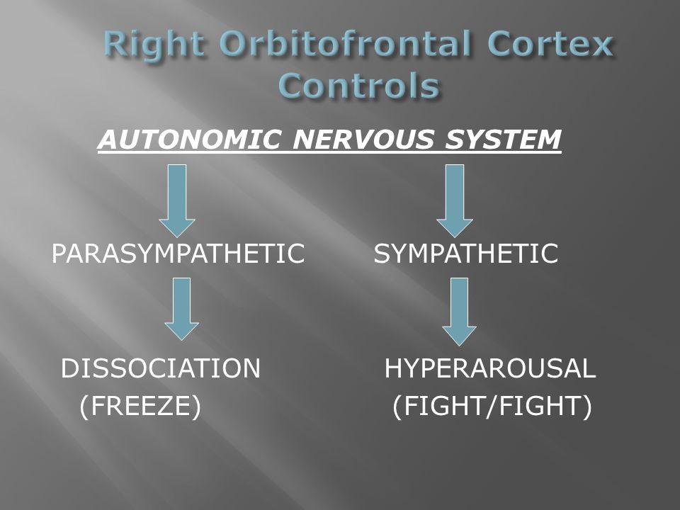 AUTONOMIC NERVOUS SYSTEM PARASYMPATHETIC SYMPATHETIC DISSOCIATION HYPERAROUSAL (FREEZE) (FIGHT/FIGHT)