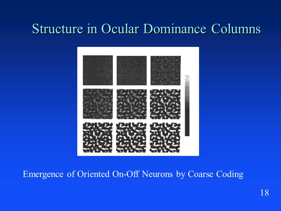 18 Structure in Ocular Dominance Columns Emergence of Oriented On-Off Neurons by Coarse Coding