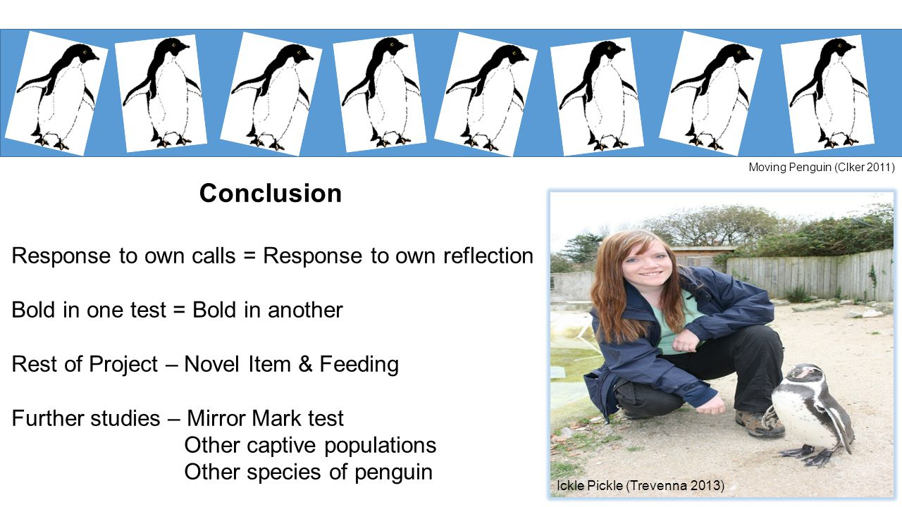 Conclusion Response to own calls = Response to own reflection Bold in one test = Bold in another Rest of Project – Novel Item & Feeding Further studies – Mirror Mark test Other captive populations Other species of penguin Ickle Pickle (Trevenna 2013) Moving Penguin (Clker 2011)