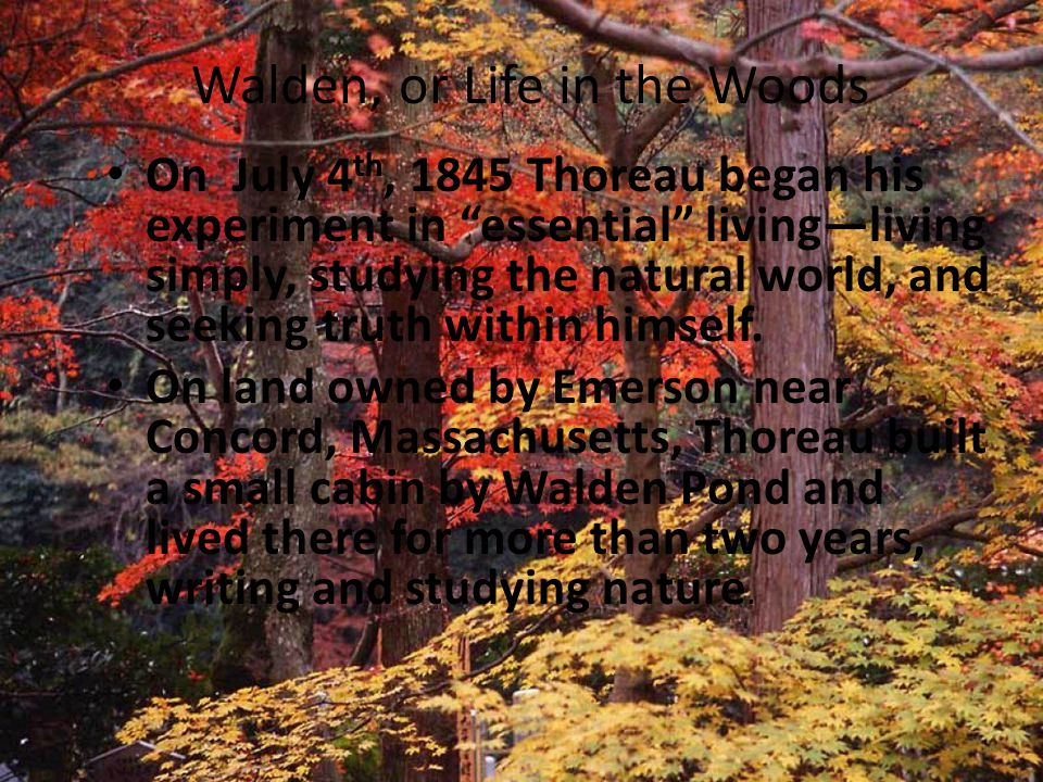 Walden, or Life in the Woods On July 4 th, 1845 Thoreau began his experiment in essential living—living simply, studying the natural world, and seeking truth within himself.