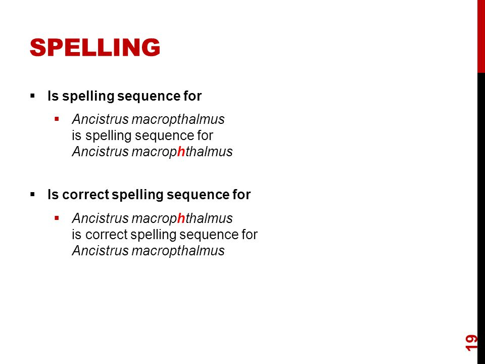 SPELLING  Is spelling sequence for  Ancistrus macropthalmus is spelling sequence for Ancistrus macrophthalmus  Is correct spelling sequence for  Ancistrus macrophthalmus is correct spelling sequence for Ancistrus macropthalmus 19