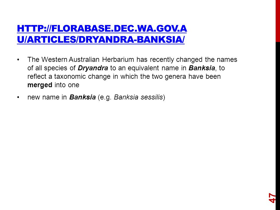 HTTP://FLORABASE.DEC.WA.GOV.A U/ARTICLES/DRYANDRA-BANKSIA/ The Western Australian Herbarium has recently changed the names of all species of Dryandra to an equivalent name in Banksia, to reflect a taxonomic change in which the two genera have been merged into one new name in Banksia (e.g.