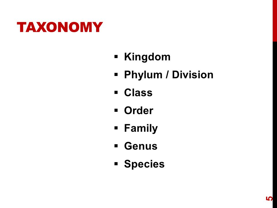  Kingdom  Phylum / Division  Class  Order  Family  Genus  Species 5