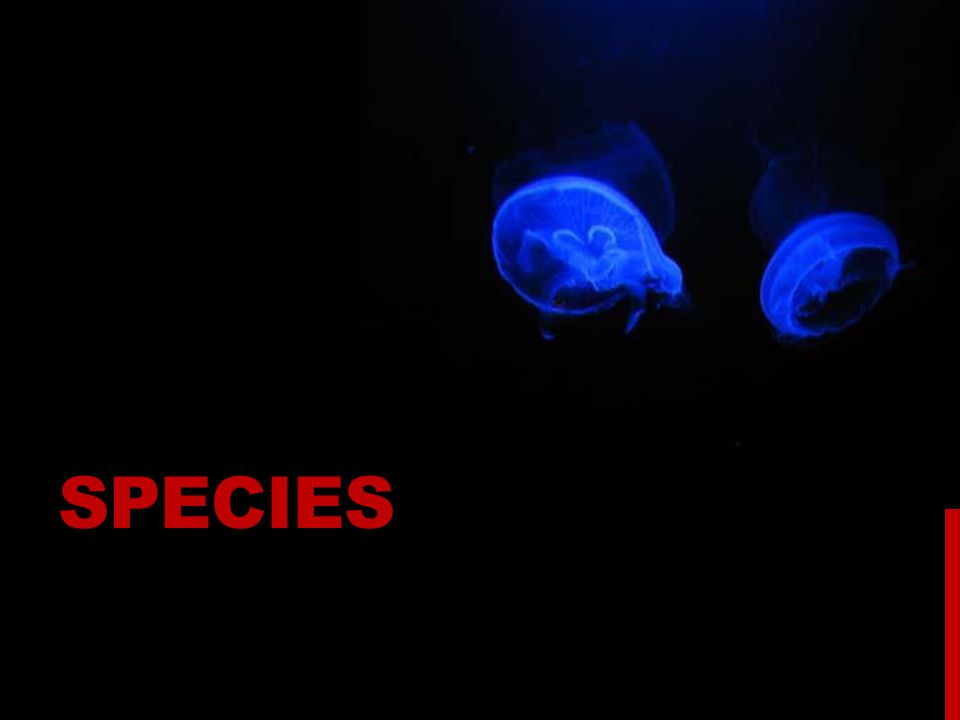 SPECIES CONCEPT  Species are the most inclusive population of individuals having the potential for phenotypic cohesion mechanisms, i.e., mechanisms that limit the population boundaries by the action of such basic microevolutionary forces as gene flow, natural selection and genetic drift.