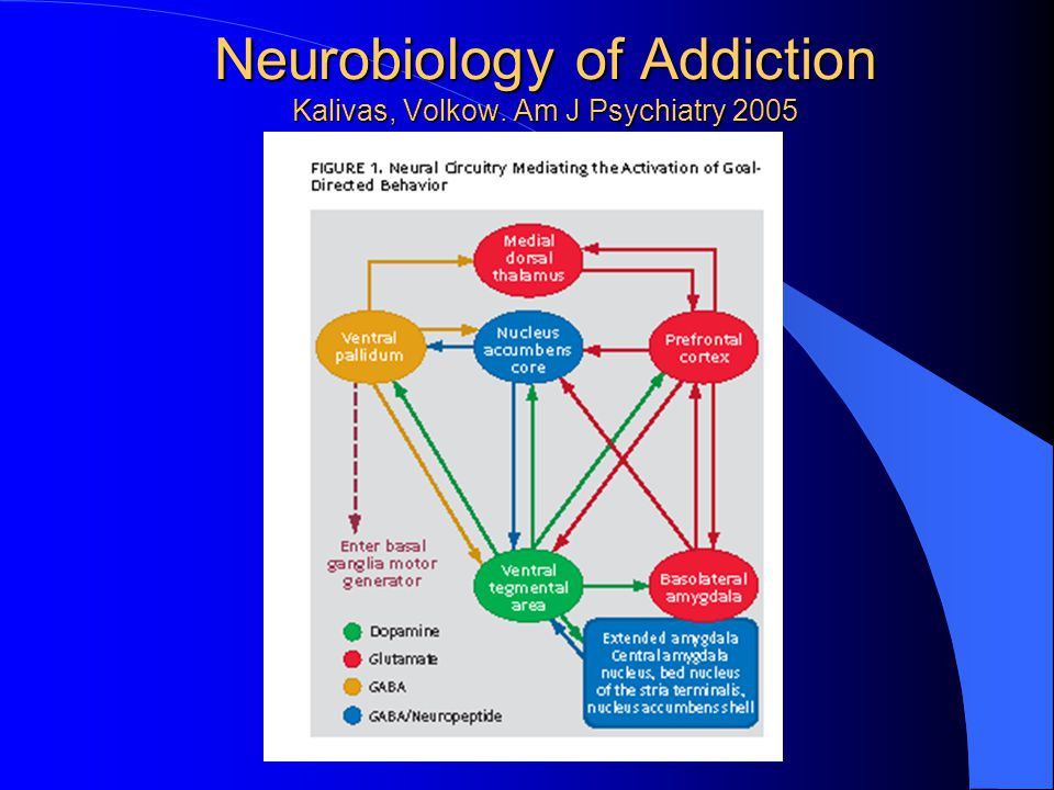 Neurobiology of Addiction Kalivas, Volkow. Am J Psychiatry 2005