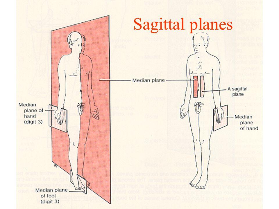 Sagittal planes
