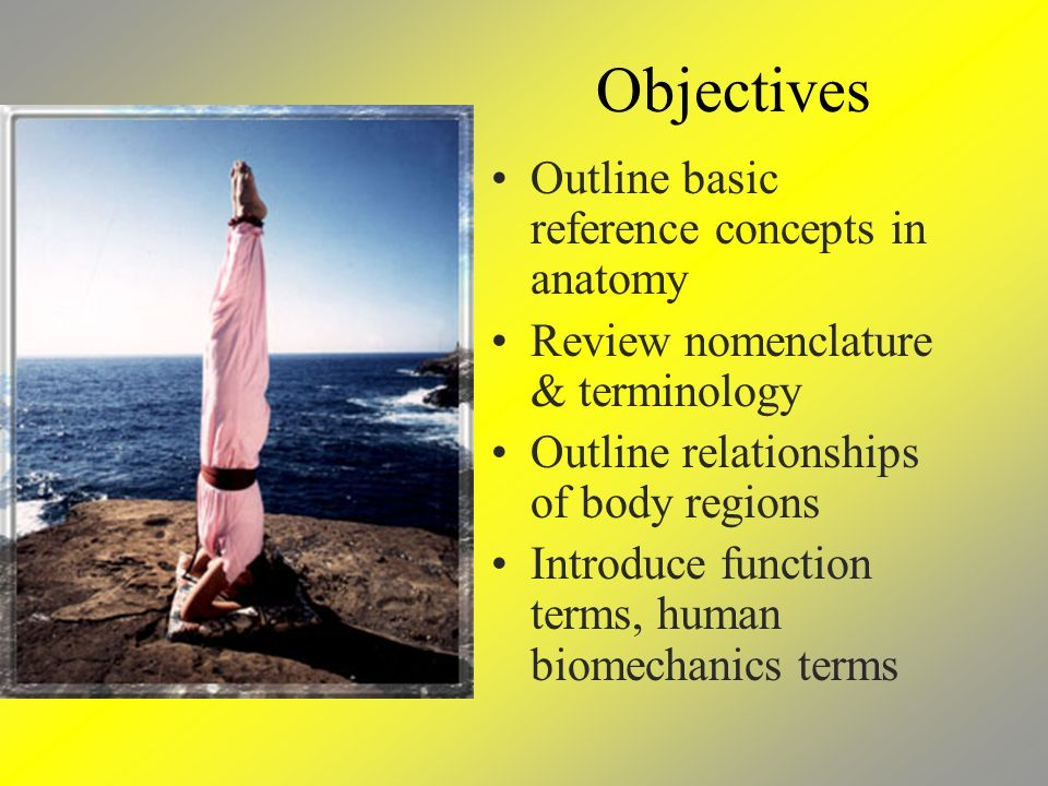Objectives Outline basic reference concepts in anatomy Review nomenclature & terminology Outline relationships of body regions Introduce function terms, human biomechanics terms