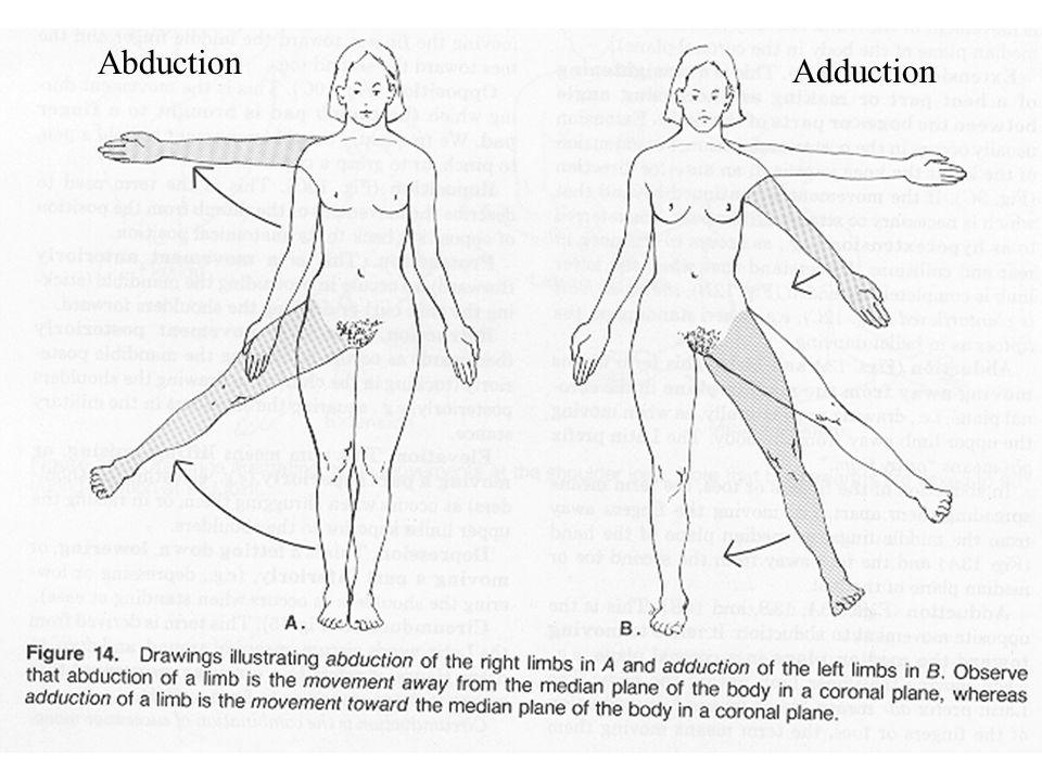 Abduction Adduction