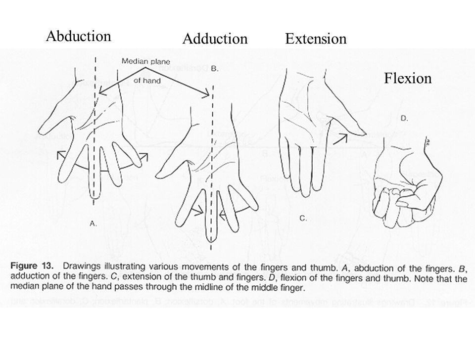 Abduction AdductionExtension Flexion