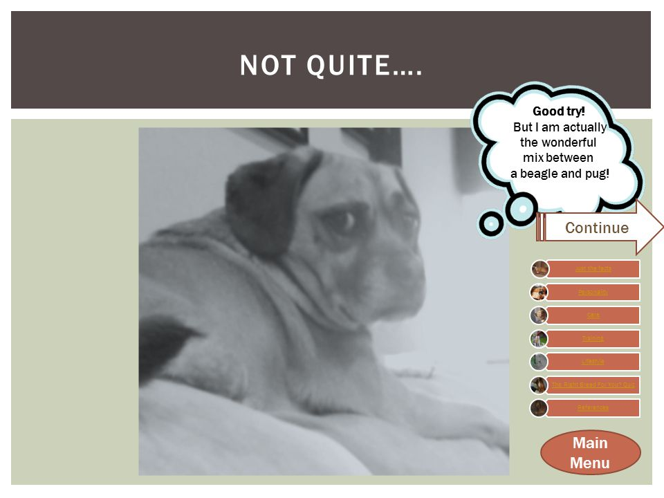 WHAT IS A PUGGLE ANYWAY. TEST YOUR KNOWLEDGE…  1.