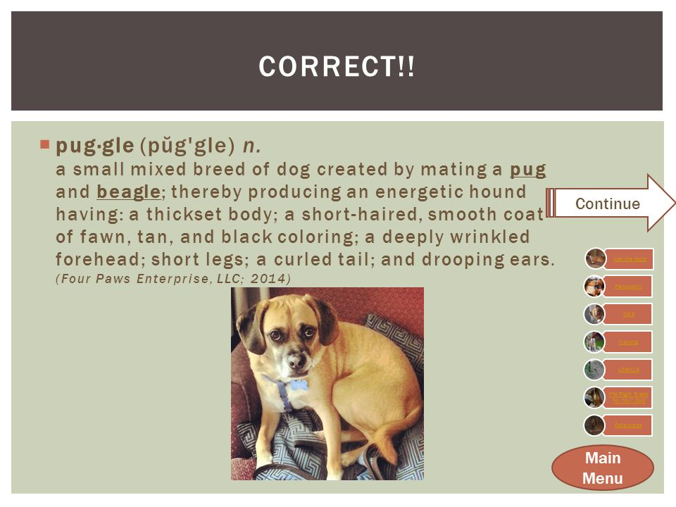 NOT QUITE…. Good try. But I am actually the wonderful mix between a beagle and pug.