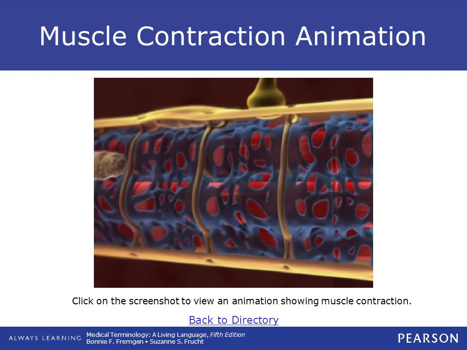 Medical Terminology: A Living Language, Fifth Edition Bonnie F. Fremgen Suzanne S. Frucht Muscle Contraction Animation Click on the screenshot to view