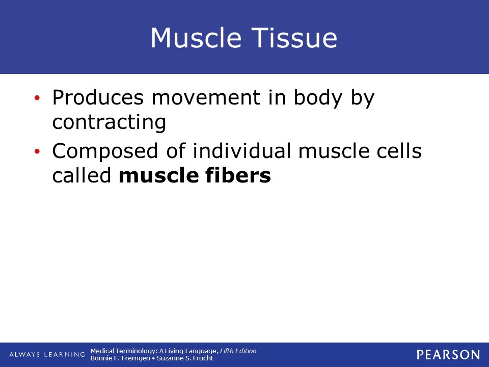 Medical Terminology: A Living Language, Fifth Edition Bonnie F. Fremgen Suzanne S. Frucht Muscle Tissue Produces movement in body by contracting Compo