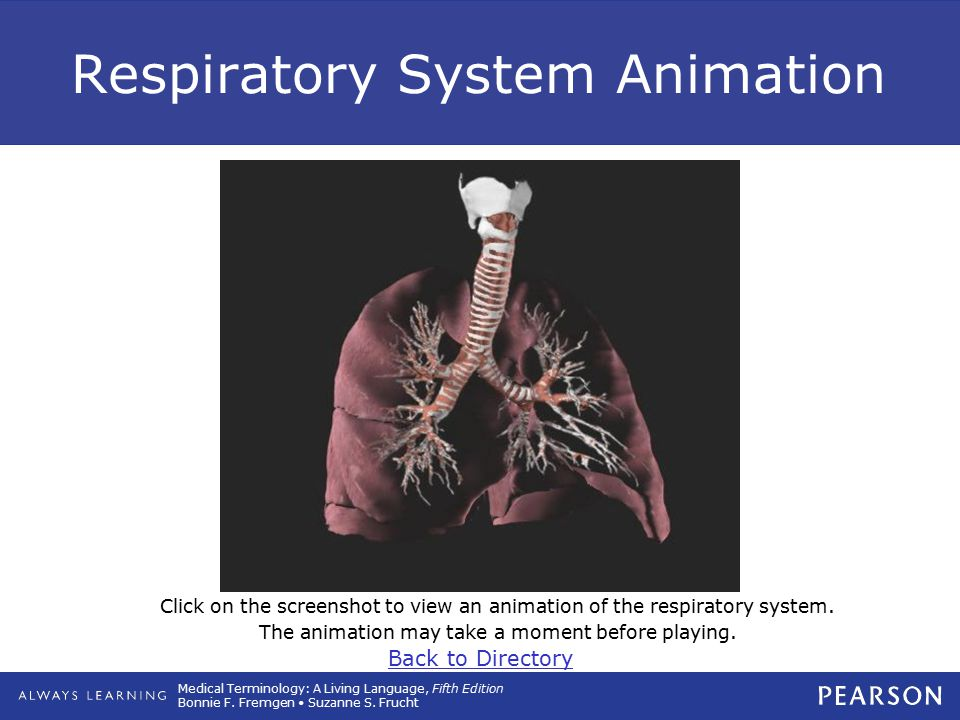 Medical Terminology: A Living Language, Fifth Edition Bonnie F. Fremgen Suzanne S. Frucht Respiratory System Animation Click on the screenshot to view
